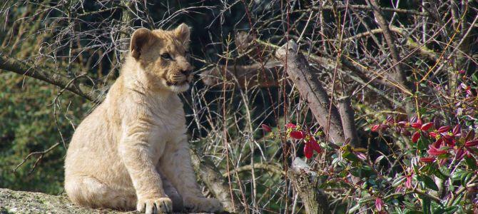 Liebste Tierbilder – Teil 3