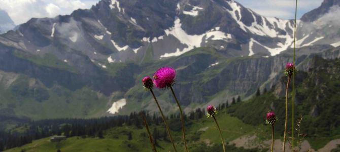 In der Schweiz unterwegs – Braunwald am Ortstock im Glarnerland
