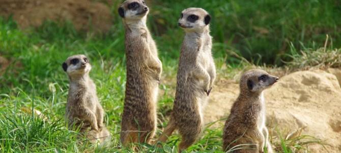 Grosse und kleine Tiere aus dem Kölner Zoo