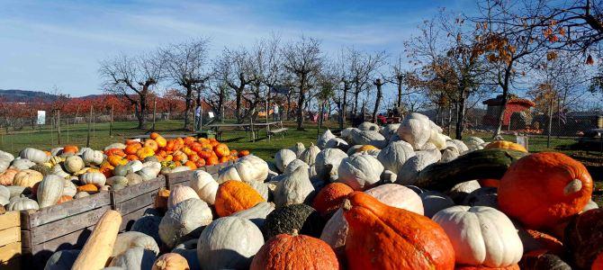 Herbstimpressionen von der Jucker Farm