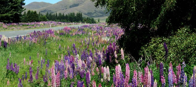 Am anderen Ende der Welt: Willkommen in Neuseeland