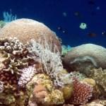 Indonesiens Korallenriffe sterben