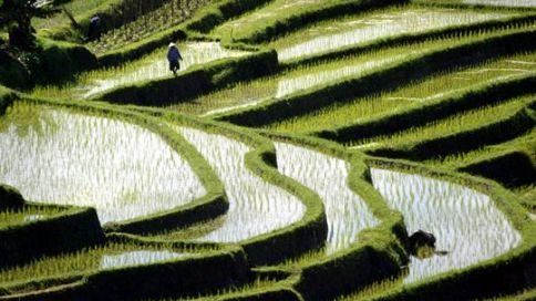 Die Reisterrassen bei Jatiluwih © REUTERS/Bob Strong Fotoquelle: zeit.de