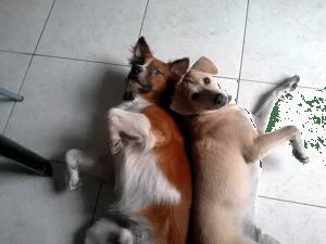 Unsere beiden Hunde Benny und Pubsy