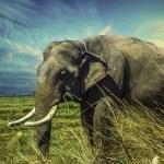 Zwei Sumatra-Elefanten getötet