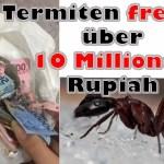 Termiten fressen über 10 Millionen Rupiah
