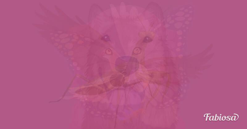hayvan-testi-1.jpg