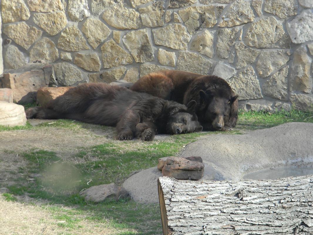 Current Bears  Bear Program  Baylor University