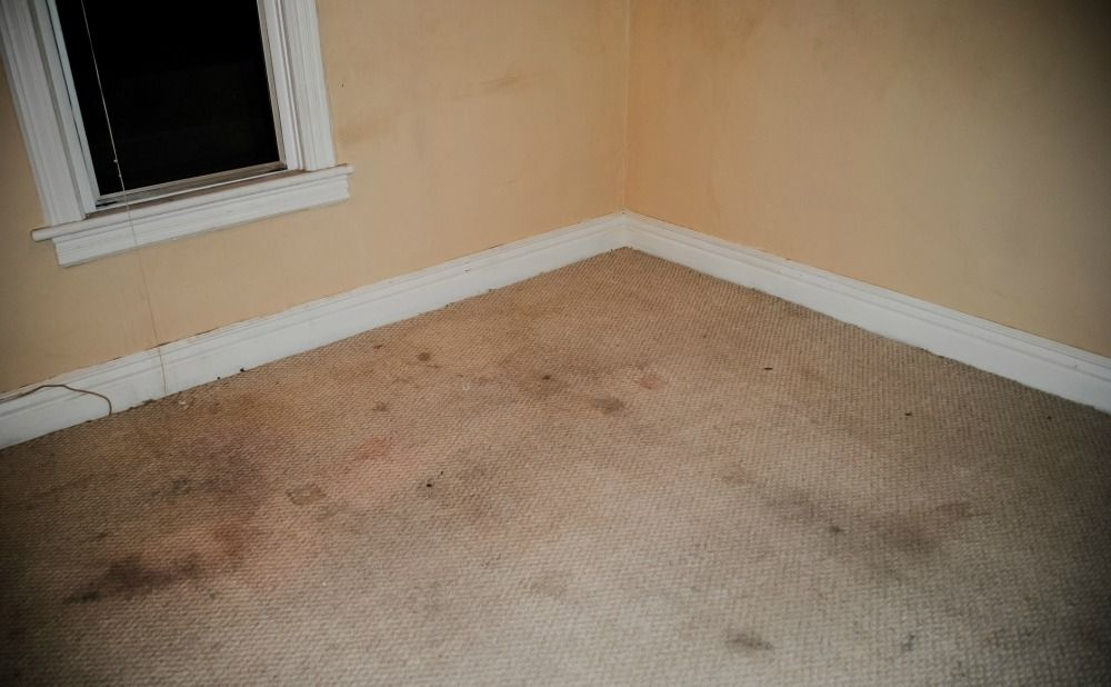 tenant-damages-include-carpet-stains-philadelphia-rental-property
