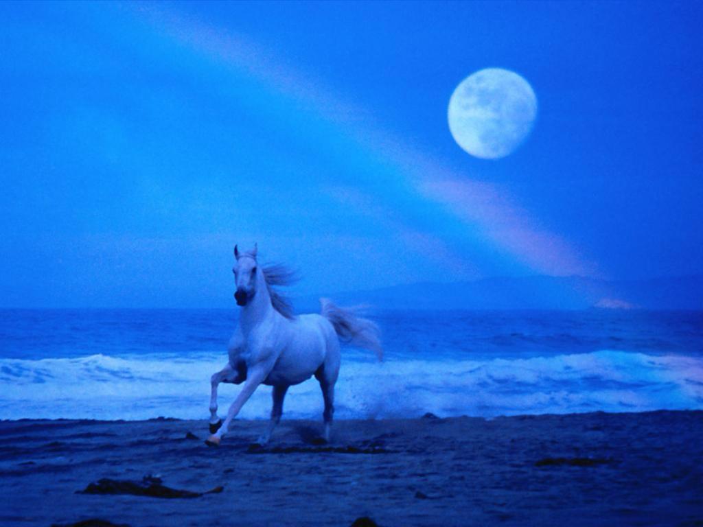 Ombromanto il Cavallo di Tolkien