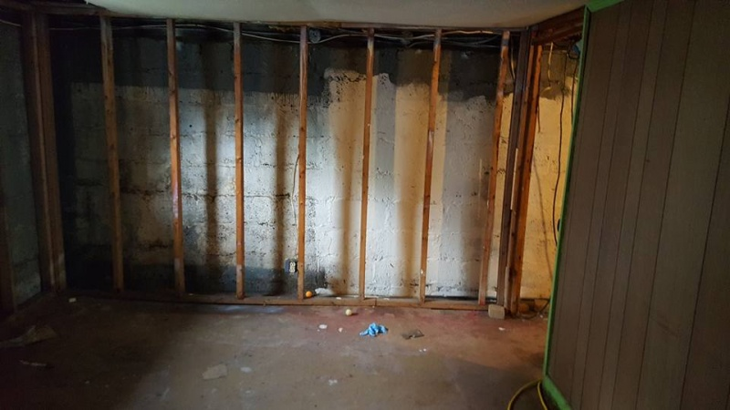 Removing Mold Problems After Natural Disasters