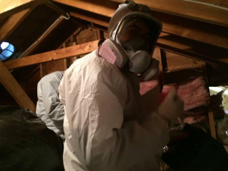 What To Expect From A Professional Mold Inspection