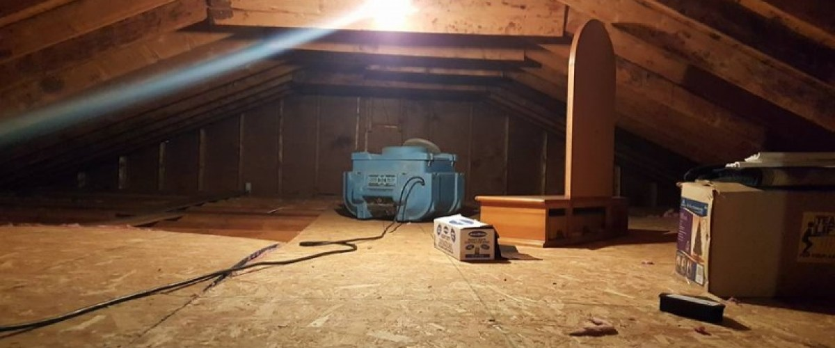 Removing attic mold