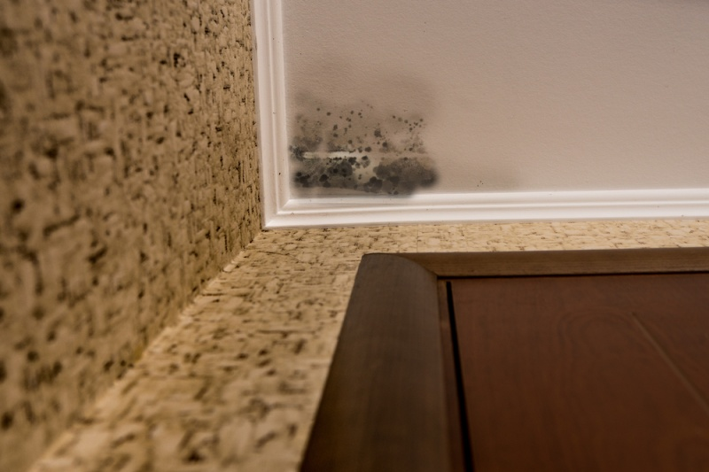 Should I Keep or Throw Away Items After Mold Removal?
