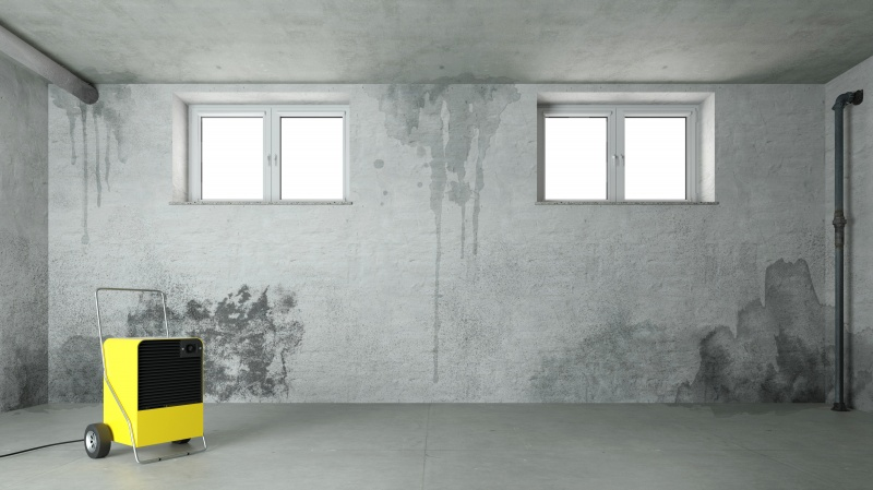 Start Preventing Mold Issues Before Fall & Winter Months
