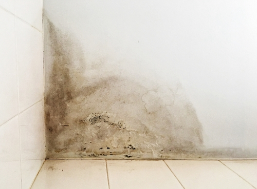 Why You Should Fix the Mold Before Selling Your Home
