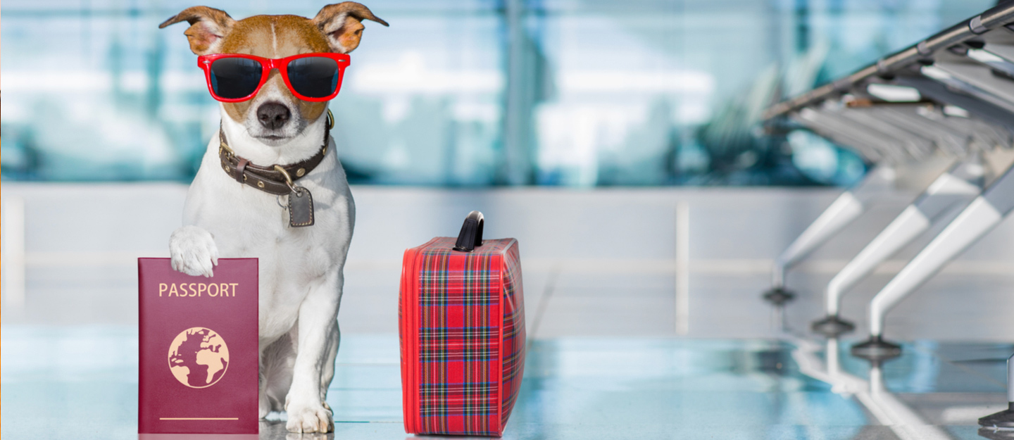 pet relocation guide how