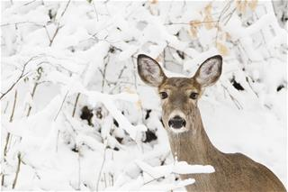 Scientists discovered something really creepy with deer: Hot Story