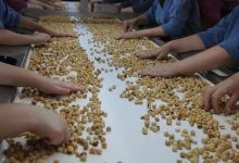 Photo of Turkey earns $1.44B from hazelnut exports in 6 months