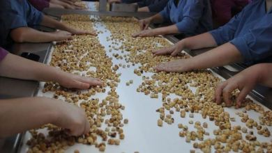 Turkey earns $1.44B from hazelnut exports in 6 months 5