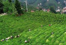 Photo of Turkey's tea exports rise 51% in Q1