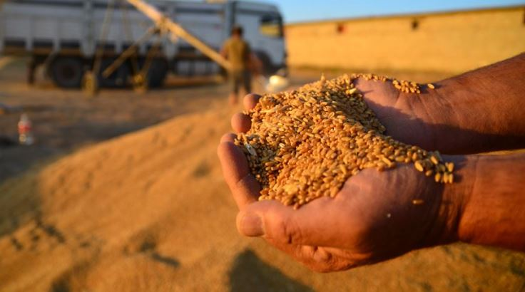 Increase in wheat production will continue in 2021 1