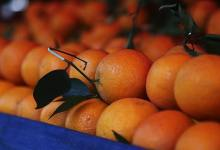 Turkey: Orange exports increased by 41% with the epidemic 3