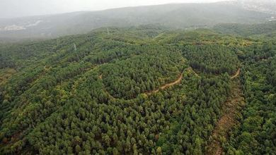 UN recognizes Turkey's success in forestation efforts 4