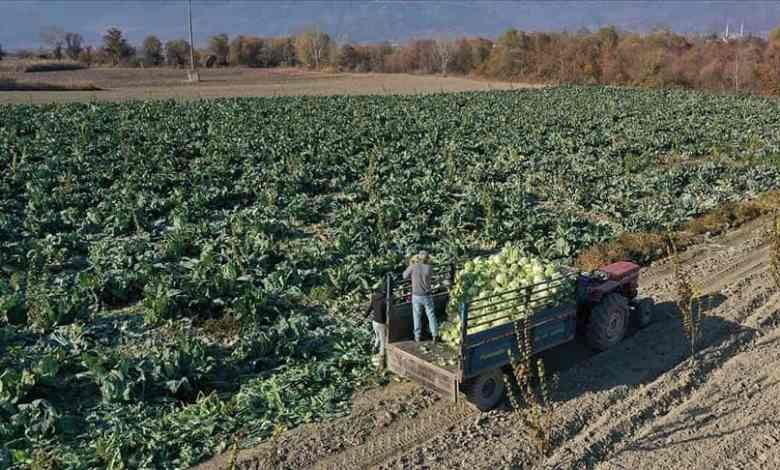Products remaining in the Farms will be marketed digitally in Turkey 1
