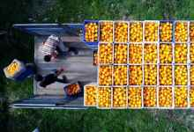 In 2020 Turkey was the most fruit exporting countries to Ukraine 11