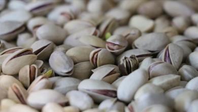 Siirt pistachio, Turkey's best pistachio is exported to Germany 24