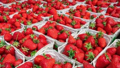 Turkey: Strawberry exports increased 333% in the first quarter of 2021 23