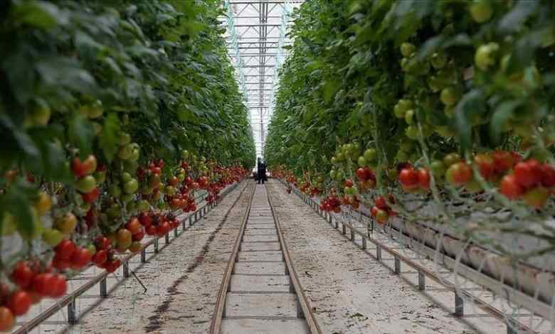 Turkey exports $128 million 909 thousand of tomatoes in 3 months of 2021 1