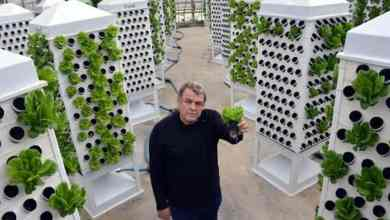 13 times the product in soilless agriculture with vertical gardening 30
