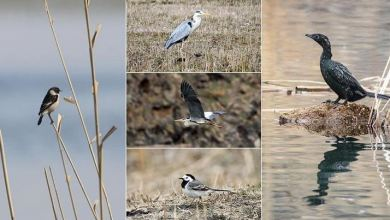Eastern Turkish city becomes hub for migratory birds 6