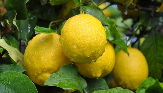 The price of lemons increased the most in May with 15.18% 1