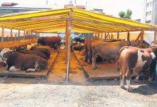 3 million 700 thousand sacrificial animals were sold during the Eid al-Adha 3