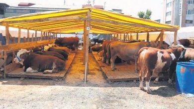 3 million 700 thousand sacrificial animals were sold during the Eid al-Adha 4