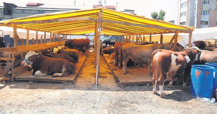 3 million 700 thousand sacrificial animals were sold during the Eid al-Adha 1