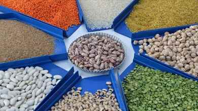 Turkey reached a historical peak in agricultural exports 9