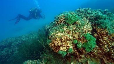 Scientists study underwater treasures of Turkey's Lake Salda 7