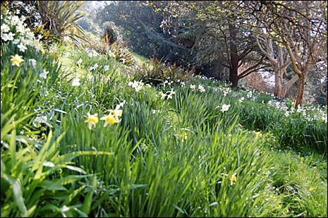 Springtime Grasses