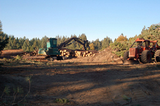 Commercial logging activity