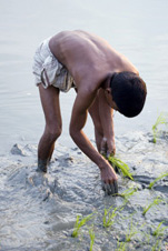 Rice farmer in Bangladesh