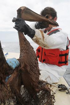 Gulf of Mexico oil spill rescue, 2010