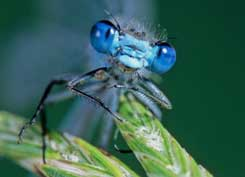 Damsel fly © Alamy Images