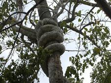 BBC  GCSE Bitesize: Adapting to rainforest life