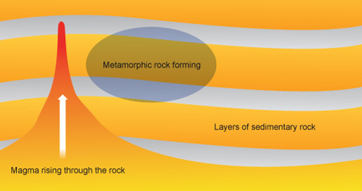 Metamorphic rocks are formed from layers of sedimentary rocks are put under pressure and heated up by magma. Metamorphic rocks form close to magma chambers, but not close enough to melt.