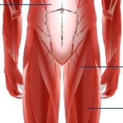 Major Muscle Diagram To Label 1994 Ford Explorer Xlt Radio Wiring Bbc Science Nature Human Body And Mind Anatomy More Diagrams Back View Of Muscles Skeleton Organs Nervous System