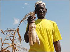 Africano sostiene maíz modificado genéticamente.
